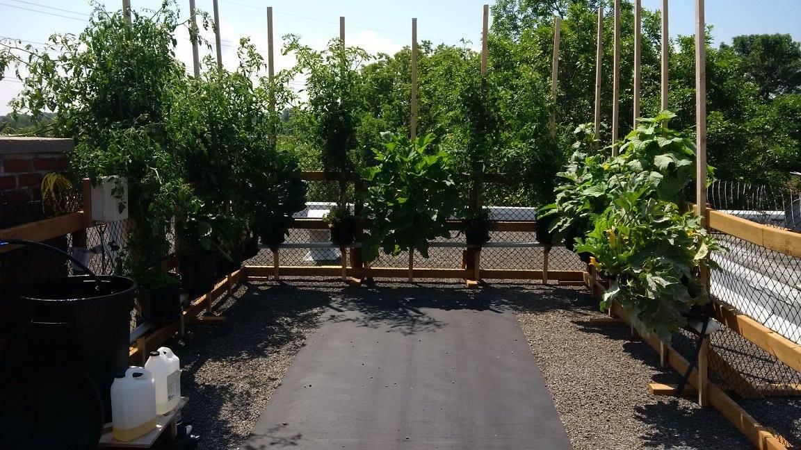 Jardin custom sur une toiture plate