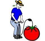 La Pompe à Tomate